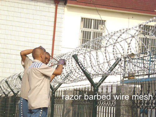 Razor Barbed Wire Mesh Fence BD-09