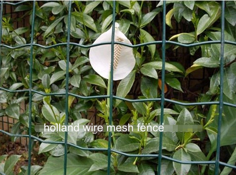 Holland Wire Mesh Fence BD-01