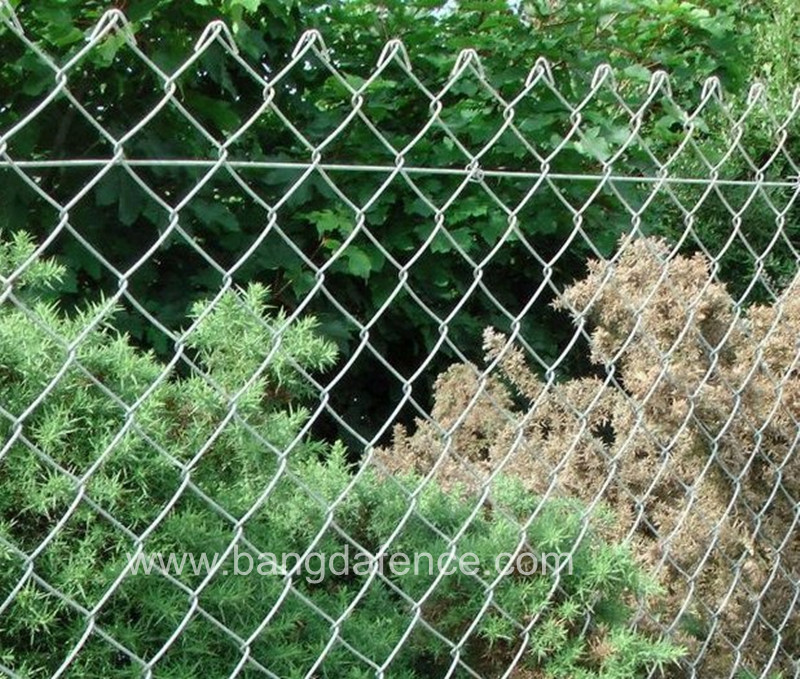 Chain Link Fence BD-08